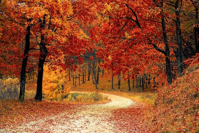 Fall leaves on trees.